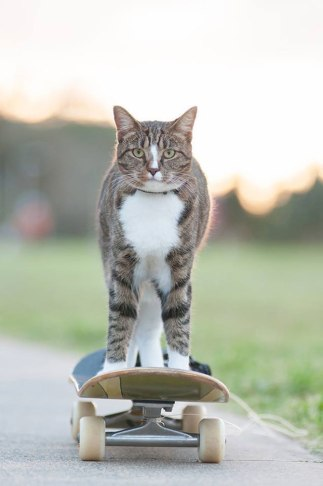pisica-didga-skateboard-australia01